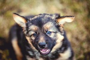 jonge hond foto