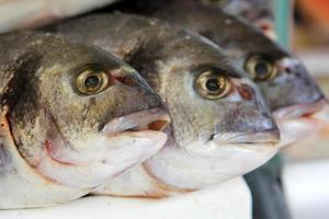 drie vissen foto