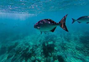 vis in de zee foto