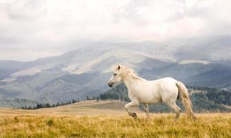 wit paard foto