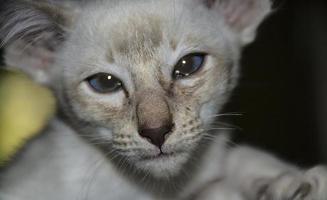 verdrietig uitziende witte kitten foto