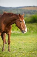 baai paard, 6 jaar oud, buiten in de stralen van de zonsondergang