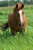 paard foto