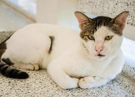 witte kat foto