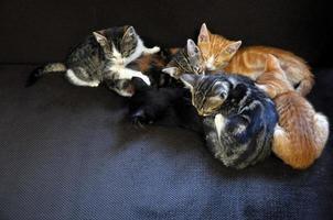 slapende kittens foto