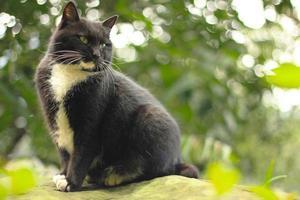 zwarte adellijke kat foto