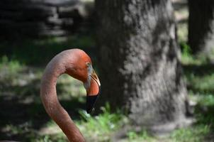 flamingo 4 foto