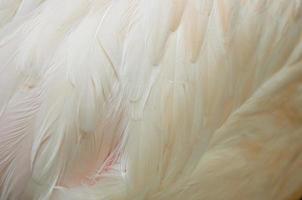 grotere flamingoveren foto