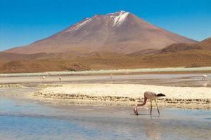 flamingo drinken foto