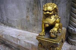 chiness voogd leeuwen foto