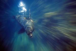 zeeleeuw foto
