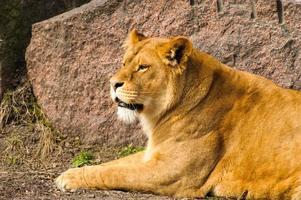 leeuwin foto
