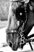 caballo foto