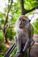 zittende aap foto