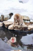 sneeuw apen foto