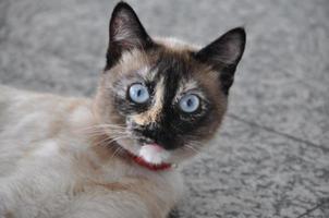 mijn kat. foto