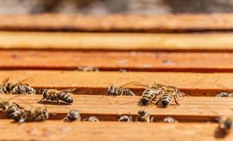bijen op honingraatframes foto