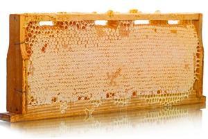 houtcellen van de korf met honing foto