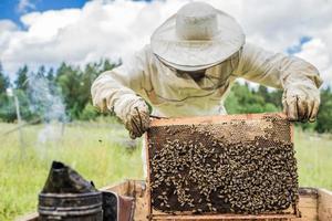 imker werkt met bijen en bijenkorven in de bijenstal. foto