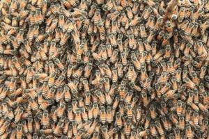 honingbijen zwermen op een honingraat foto