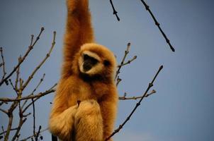 aap op de boom foto