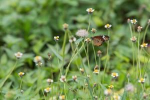 vlinder op kleine bloem foto