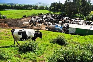 boerderijdieren foto