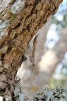 bidsprinkhaan op boom. foto