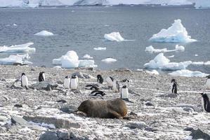 polar wiev foto