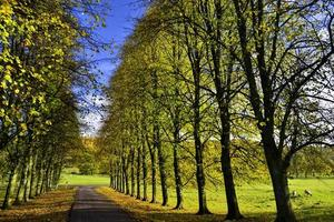laan van bomen