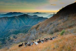 groep geiten in de bergen foto