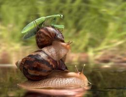 slakken en bidsprinkhanen foto