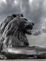 leeuw foto