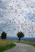 ein schwarm vögel foto