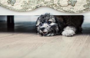 kleine boze puppy onder het bed