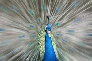 vintage afbeeldingen van vogels tot muggen foto