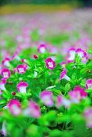 pauw paarse glitter bloemen foto