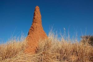 termietenheuvel foto