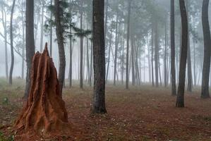 mierenheuvel foto