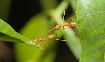 mierenbrug eenheid foto
