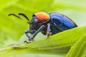 macro bug kleurrijk foto