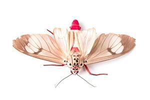 vlinder van zijdemot foto