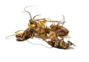 groep, dode kakkerlakken op witte achtergrond foto