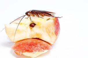 dode kakkerlak geïsoleerd op een witte achtergrond foto