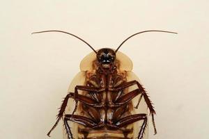 grappige doodskop kakkerlak insect foto
