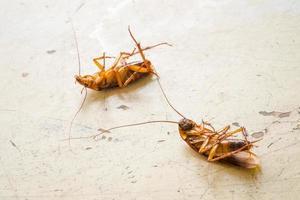 dode kakkerlak op houten tafel foto
