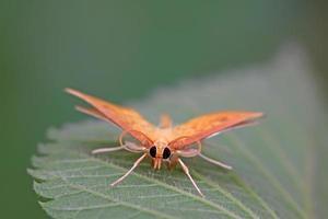 motten insecten foto