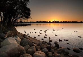 meer bij zonsondergang met eenden foto