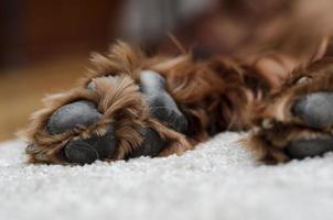 slapende hondenpoten foto