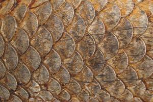 houtsnijwerk van een draak in Thailand foto